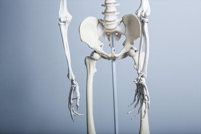 男性と女性の骨盤の違い